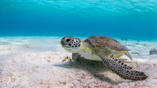 фон, вода, море, черепаха, подводный мир, морская черепаха, на дне
