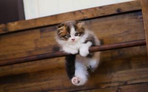 домашние животные, животные, кошки, пушистый котенок, белый