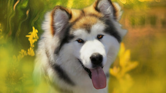 собака, язык, фон, друг