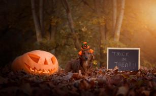 осень, взгляд, листья, свет, деревья, парк, буквы, праздник, надпись, листва, собака, шляпа, тыква, доска, шляпка