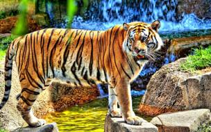 камни, водопад, ручей, тигр