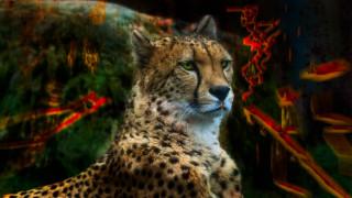дикие кошки, ярко, гепард, обработка, пятна, портрет, краски, фон, абстракция, кошки, цвета, морда, взгляд