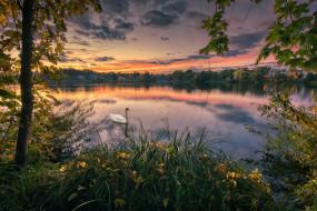 осень, лебедь, деревья, закат, озеро, парк, птица