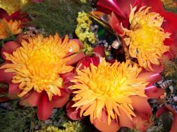 цветы, хризантемы, оранжевые