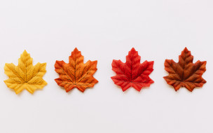 листья, фон, colorful, осенние, maple, осень, background, autumn, leaves