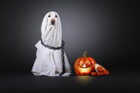 привидение, тыква, костюм, хеллоуин, накидка, серый фон, простыня, цепь, белая, собака