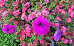 цветы, лепестки, фон
