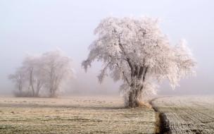 иней, поле, дерево