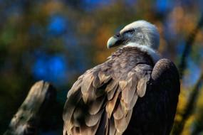птица, взгляд