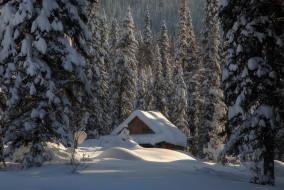снег, лес, ели, избушка, Россия, хижина, сугробы, зима