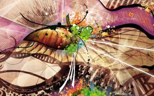 линии, сеть, цвета