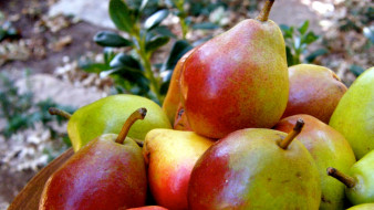 фрукты, груши