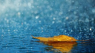 вода, капля, дождь, лист