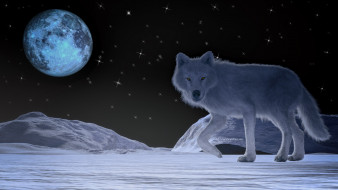 волк, луна