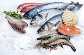 креветки, ассорти, рыба