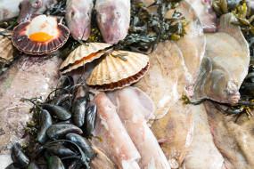 мидии, устрицы, рыба