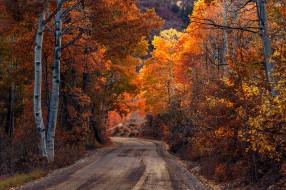 осень, дорога, лес