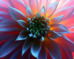 макро, серединка, свет, цветок
