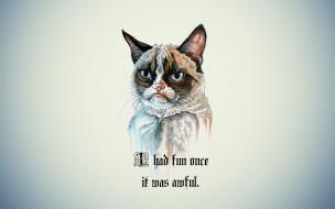 минимализм, надпись, кот