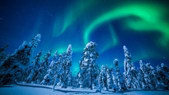 лес, Лапландия, снег