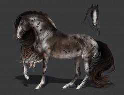 фон, конь