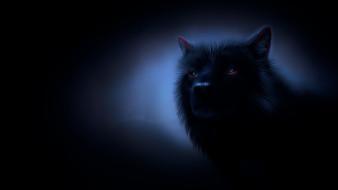 фон, волк
