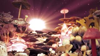 грибы, свет