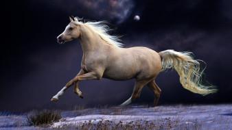снег, поле, галоп, буланый, конь