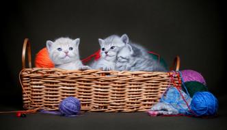 тёмный фон, клубки, трио, корзинка, нитки, малыши, котята, корзина