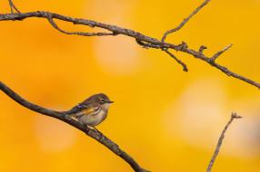 природа, птица, ветка, осень