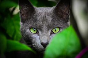 животные, коты, кот, голова, кошка, листья, серый