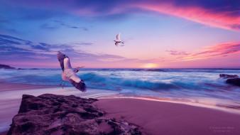 море, небо, закат, берег, чайка, аист
