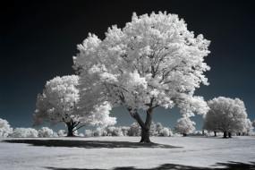 разное, компьютерный дизайн, деревья