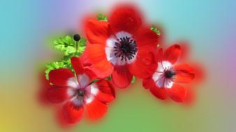 фон, цветы, лепестки
