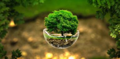 дерево, стекло
