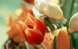 тюльпан, букет