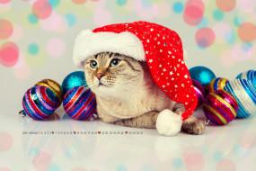 шар, игрушка, шапка, кошка
