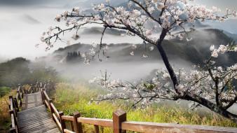 дерево, цветение, трава, лестница, горы