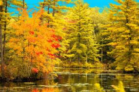 осень, река, отражение