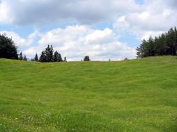зеленая, трава, луг