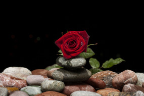 камни, роза