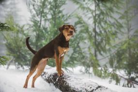 2019, кадры из фильма, приключения, a dogs way home, путь домой