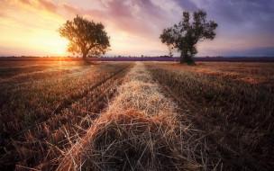 деревья, солнце, закат, солома, поле