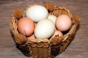 свежие, яйца