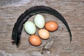 яйца, свежие