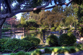 пруд, парк, деревья