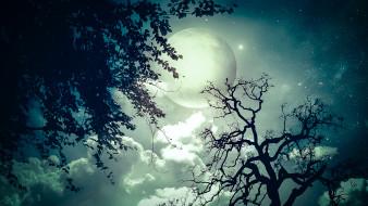 тучи, луна, звезды, небо, деревья