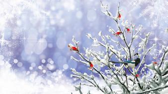 ветки, снег, сорока