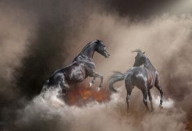 лошадь, конь, огонь, пожар, фон, туман, поза, природа