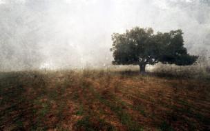 поле, туман, дерево